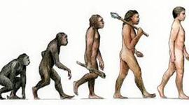 History of Evolution timeline