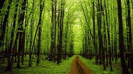 Environmental Movement timeline