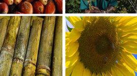 Política de Biocombustibles- Biodiésel-en Colombia (2002-2008) timeline