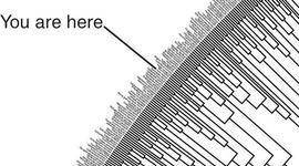 The evolution of evolution timeline