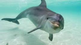 Bottlenose Dolphin timeline