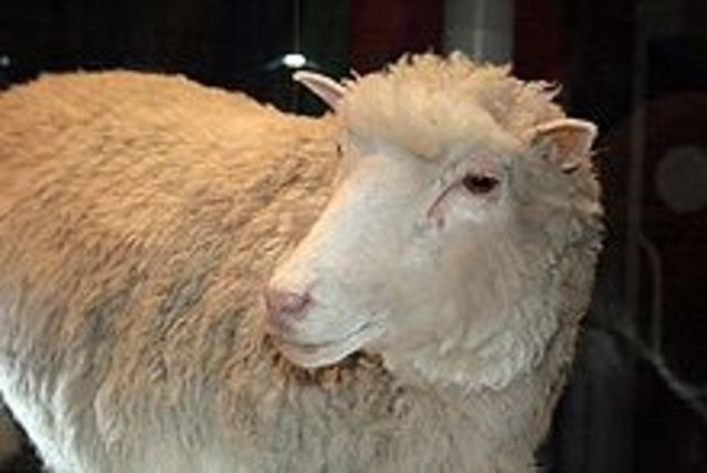 Dolly the Sheep cloned