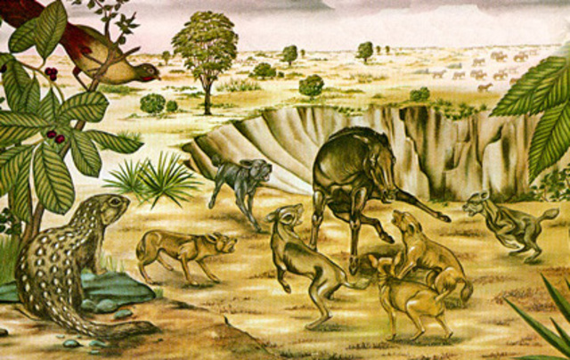 Cenozoico - Terciario - Plioceno (5 millones de años)