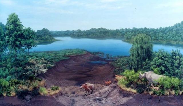 Cenozoico - Terciario - Mioceno (25 millones de años)