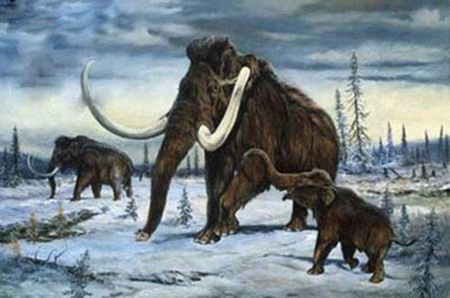 Cenozoico - Terciario - Eoceno (55 millones de años)