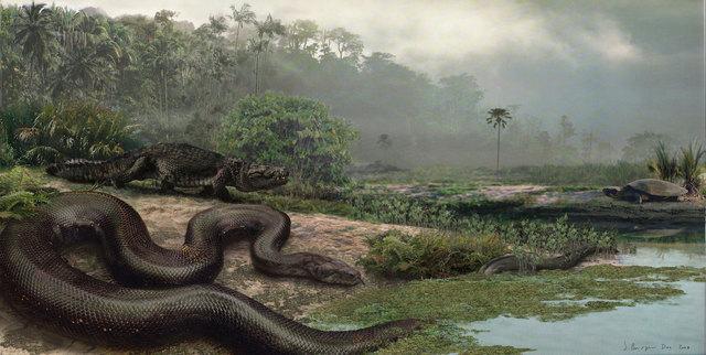 Cenozoico - Terciario - Paleoceno (65 millones de años)