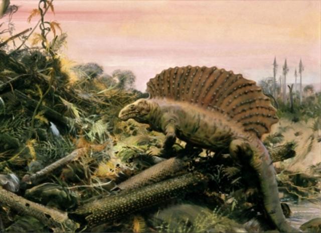 Paleozoico - Pérmico (286 millones de años)