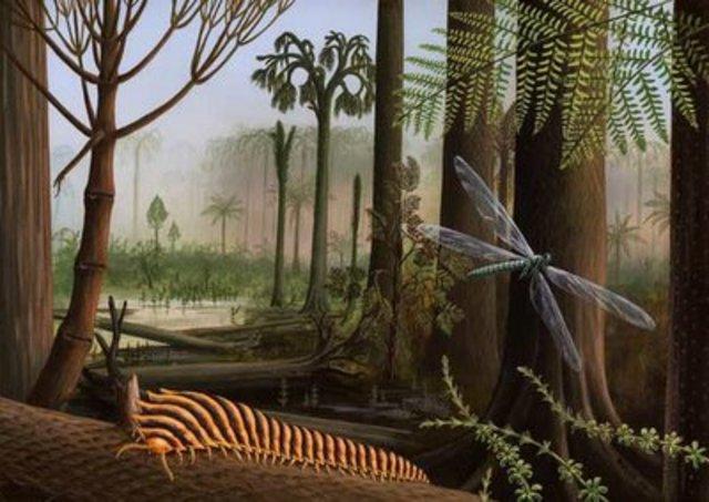 Paleozoico - Carbonífero (360 millones de años)