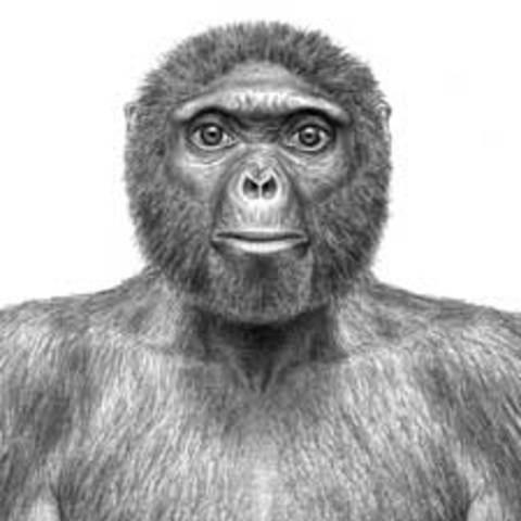 Oldest Skeleton of Human Ancestry