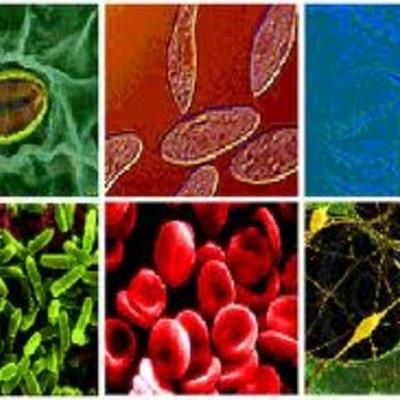 El Desarrollo de la Biologia timeline