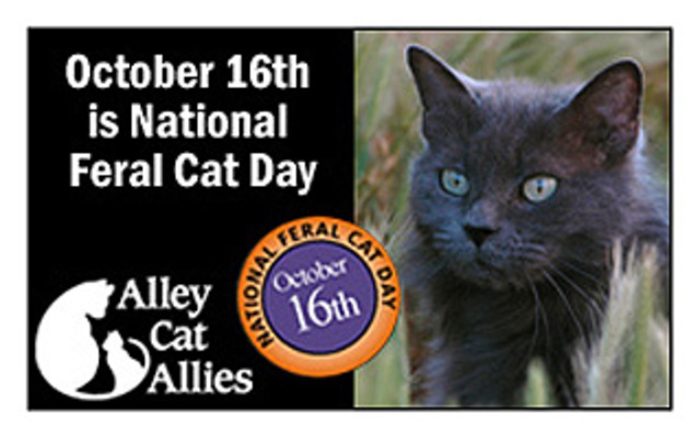 national cat day - photo #5