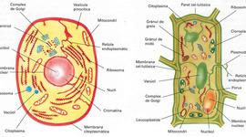 La cèl·lula timeline