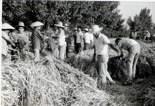 Mao induces collective farming
