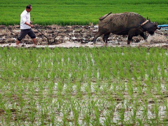 Nation Revokes Private Farming Ban