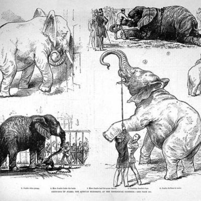 Jumbo the Elephant timeline