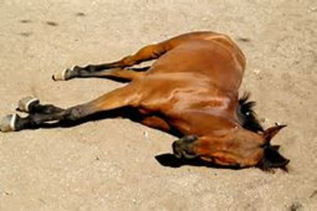 horse dead