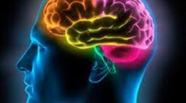 Cuidemos nuestro sistema nervioso ¿Usted lo hace? timeline