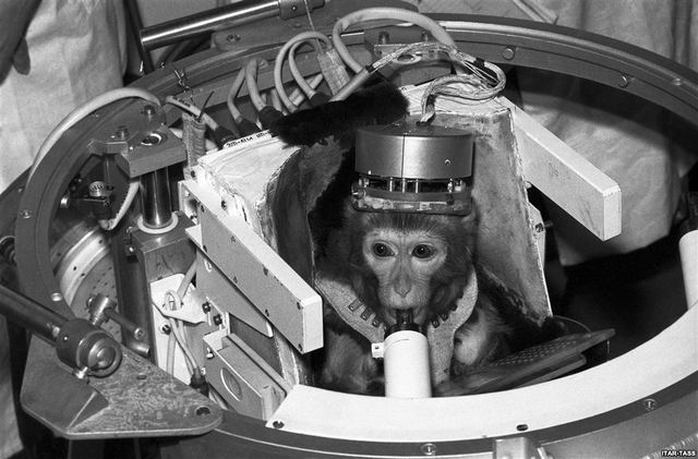 Albert the Rhesus Monkey