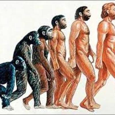 Evolución de los homínidos laura2903 timeline