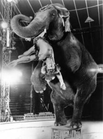 Anna Mae the Elephant rides the Staten Island Ferry