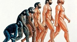 Evolution of Homo Sapien - Please DO NOT PAY ATTENTION to the months/days/years! Just look at the distance between the points! Read the descriptions to see how many years ago these organisms/creatures evolved! timeline