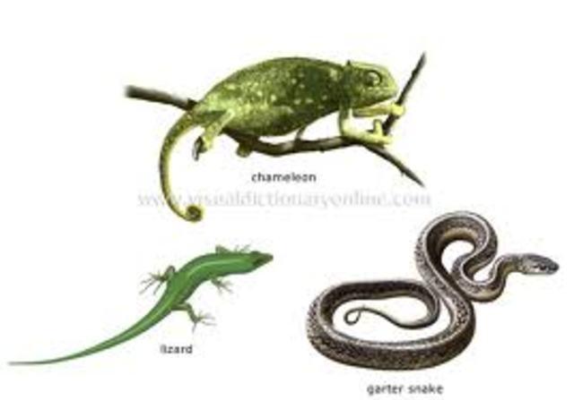 Reptiles Evolve