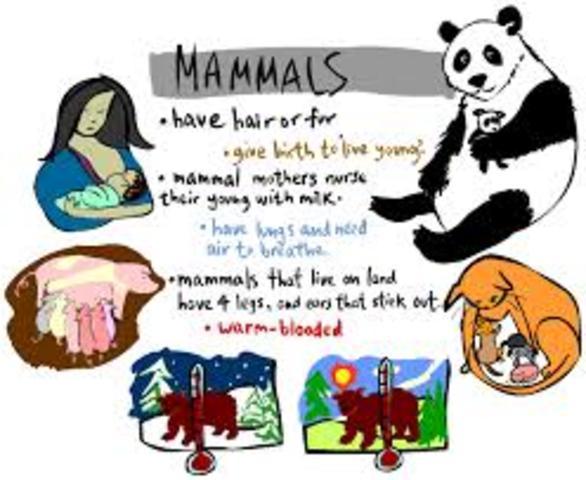 Mammals Evolve