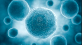 The History of Cells timeline