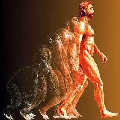 evolution of species timeline