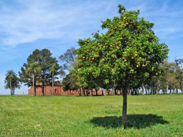 Linden - Lime - Basswood Honey