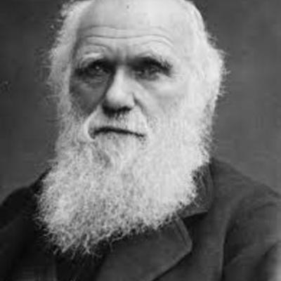 Darwin, Diego Basadre timeline
