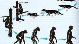 Desarrollo de la teoría de la evolucíon timeline