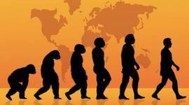 Teoria de la evolucion timeline