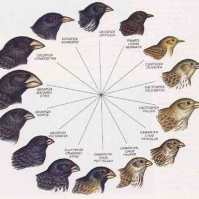 personajes importantes de la ecologia timeline
