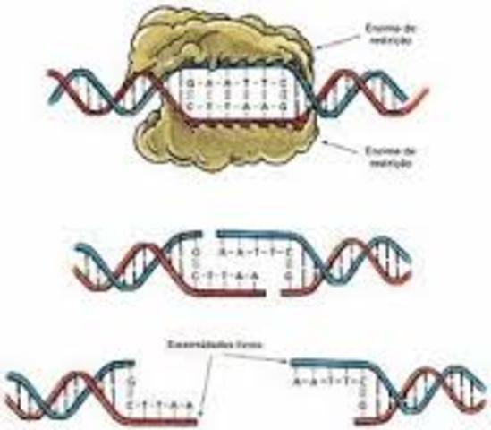 Especificidad en las enzimas de restriccion