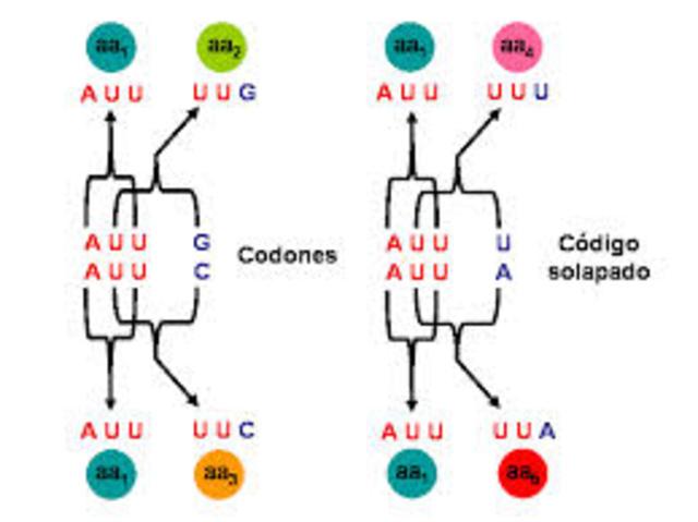Descubrimiento del codigo genetico