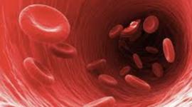 history of blood  timeline