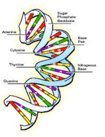 Genetic Testing History