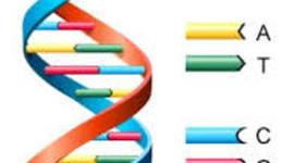 Major Innovations of Biotechnology timeline
