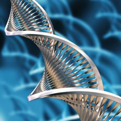 Major Innovations in the History of Biotechnology  timeline