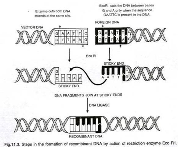 Bacterial enzymes