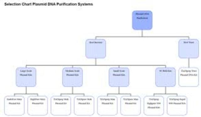 DNA plasmids