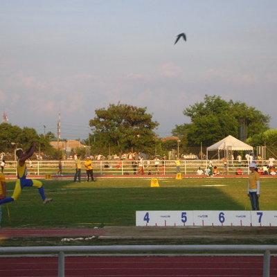 cultura deportiva y entrenamiento deportivo  timeline