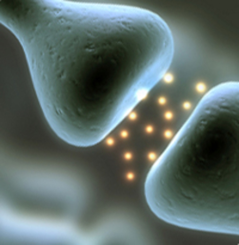 Demostración de la neurotransmisión
