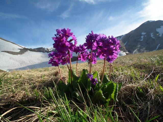 Решением ЮНЕСКО присвоен статус биосферного