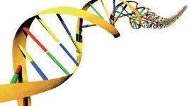 Cronograma sobre los principales acontecimientos del DNA timeline