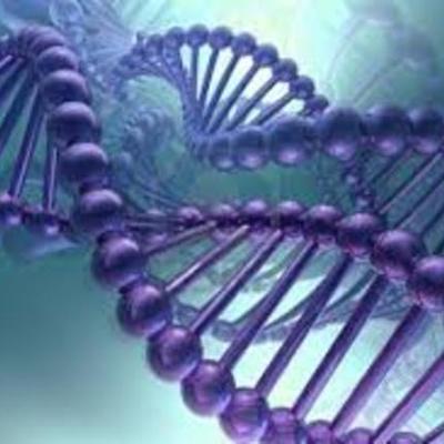 Cronograma del ADN timeline