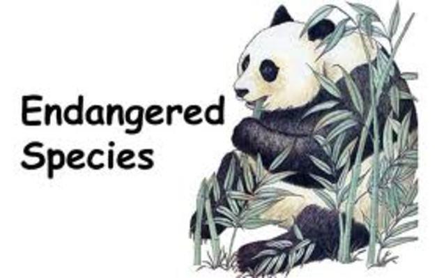 endangere species act