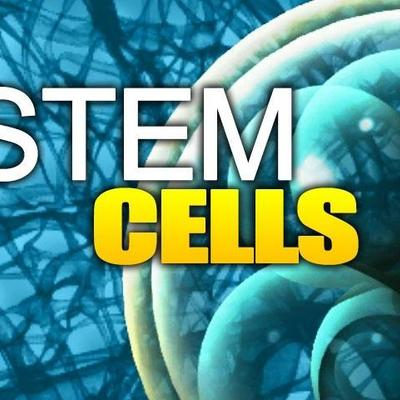 Stem Cell History By: Tj Groover timeline