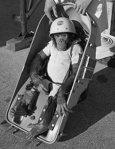 1st chimpanze in space